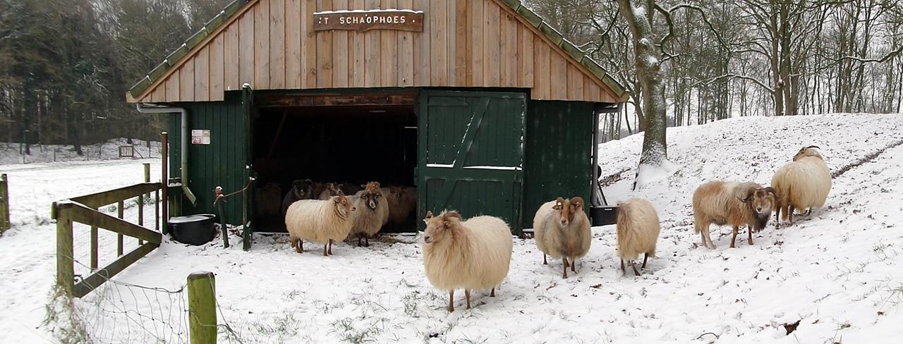 Sneeuw bij de kooi